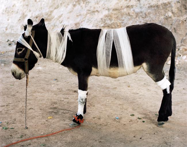 Servet Kocyigit, Mountain Zebra